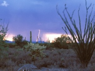 PHOENIX AZ | 5 Top Monsoon Storm Damage Repair and Flood Restoration Contractors